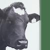 Logo - Kwaliteitsslagerij Adelheid